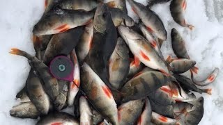 Зимняя рыбалка Ловля окуня на безмотылку Жор окуня