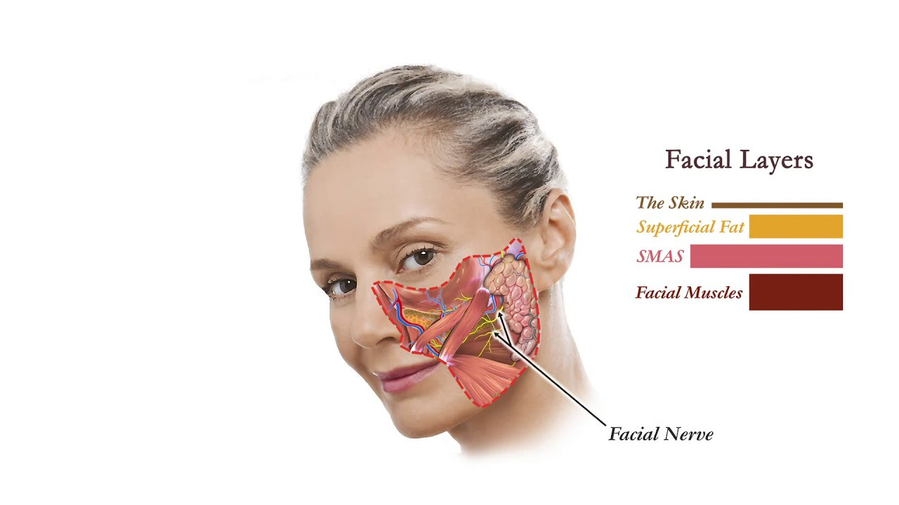 Facelift Anatomy - YouTube