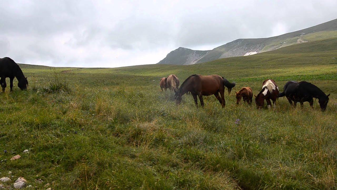 Картинки по запросу лошадь на плато Лагонаки