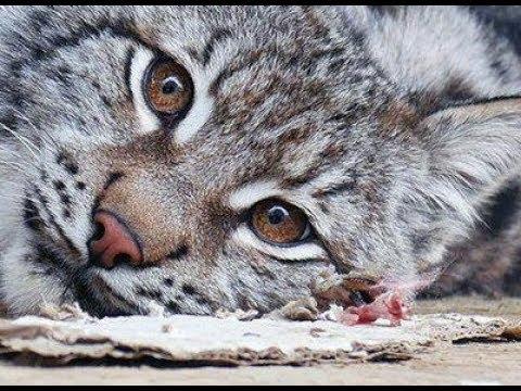 Прояснение ситуации по животным, центр реабилитации диких ...