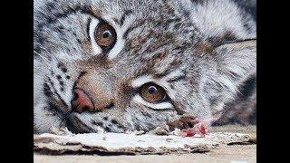 """Прояснение ситуации по животным, центр реабилитации диких животных """"Сирин"""""""