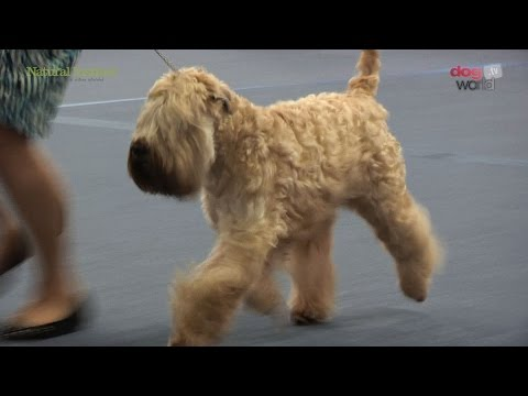 Scottish Kennel Club 2016 - Terrier group Shortlist