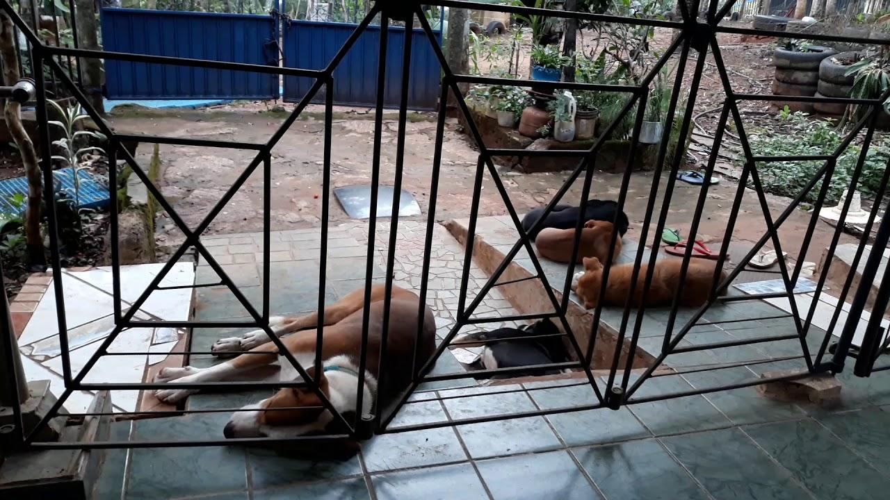 Porque eu levanto os cães adormecem, Ouro Preto Do Oeste, Rondônia, Brasil