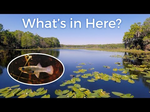 What Does A Fish Habitat Actually Look Like? — Florida Lakes