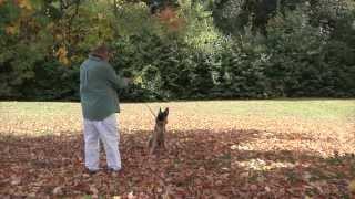 Dog Training Albany Ny