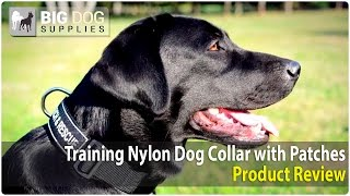 Labrador Retriever And Other Dogs Wearing Training Dog Collar