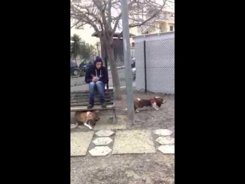 Nina e Kira al dog park