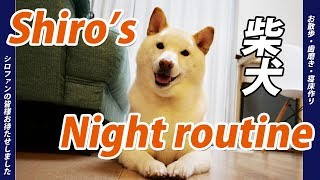 【柴犬】Shiro's Night routine シロのナイトルーティン☆【シロ動画】