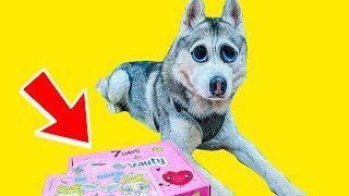 Я ЖРУ КОСМЕТИКУ!! | КОНКУРС ОТ 7DAYS (Хаски Бандит) Говорящая собака DOGVLOG