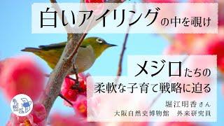バードリサーチ生態図鑑のメジロの項目を執筆して下さった、大阪自然史博物館外来研究員の堀江明香さんが、住む地域によって違うメジロの柔軟な子育てについてお話を ...
