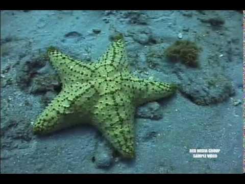 Underwater Scuba Diving Tourism Video