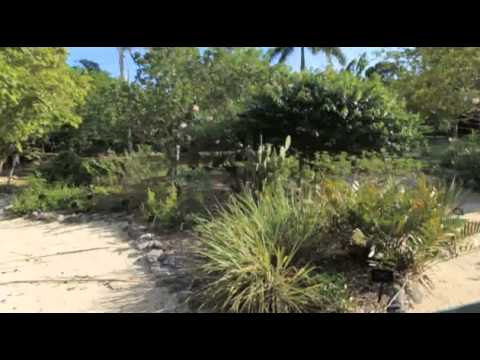 Tourism Attraction Board Video - Cayman Islands