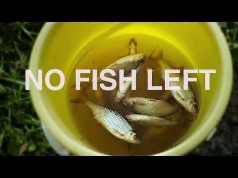 A Man Made Tragedy:  The Overexploitation Of Fish Stocks