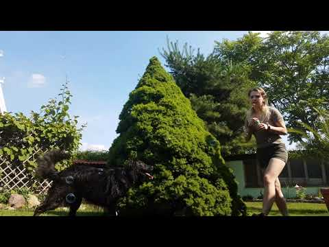 Dog chasing soap bubbles funny/ Happy Dogo / summerflashback/ dog playing