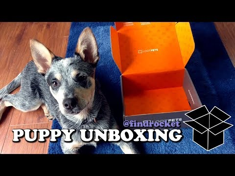 Puppy Unboxing #13 - LootPets
