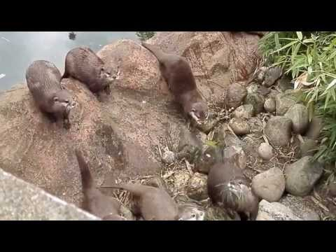 MORNING NEWS - VIDEO: Adorable Otters See Butterfly...LOSE IT!