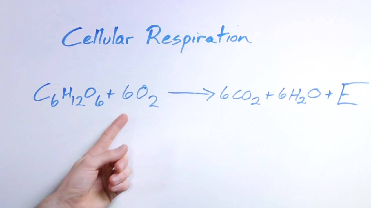 Biology organic chemistry what is the equation for respiration biology organic chemistry what is the equation for respiration youtube ccuart Image collections