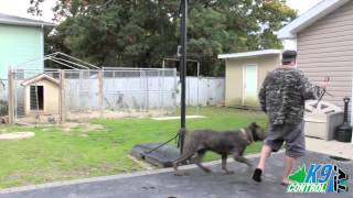 Cane Corso, Protection Training, K9 Control Tv