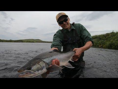 Catching MASSIVE Dolly Varden! Alaska