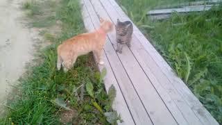 Бешеные коты