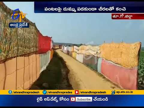 Farmers used to Sarees protect their crops at East Godavari