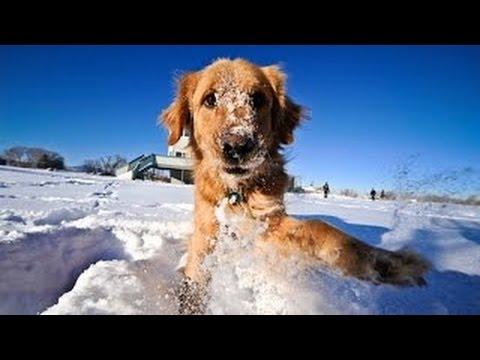 Los Perros Y Gatos Más Chistosos Jugando En La Nieve. Videos Para Morir De Risa 2016 ❤