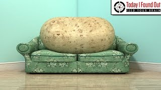 Why is Someone Who is Lazy Called a Couch Potato?