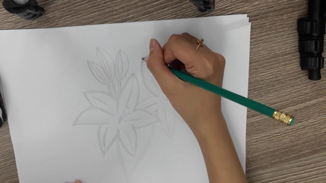 Hướng dẫn vẽ và đánh bóng hoa ly bằng bút chì cực đẹp – thesleeppatterns