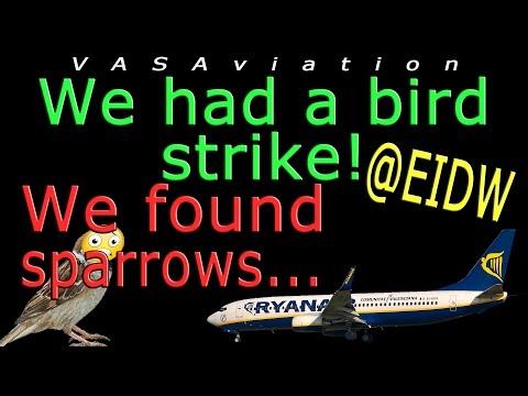 real-atc-ryanair-suffers-bird-strike-departing-dublin