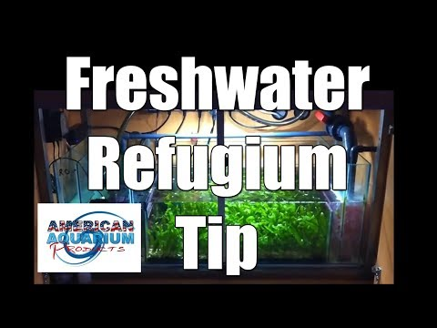 Tips for a Freshwater Refugium?