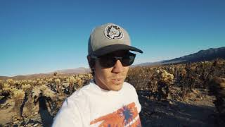 JOSHUA TREE WAS NOT WHAT WE EXPECTED