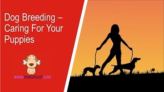 Dog Breeding – Caring for your puppies