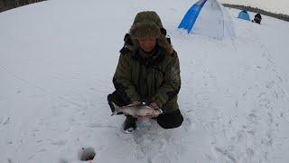 ЗИМНЯЯ РЫБАЛКА НА ВТВ 3 ДЕНЬ WINTER FISHING ON VTB 3 DAY