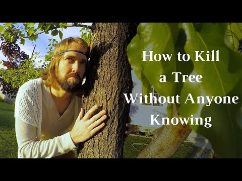 how-to-kill-a-tree-without-anyone-knowing---how-to-kill-a-tree---journey-to-sustainability