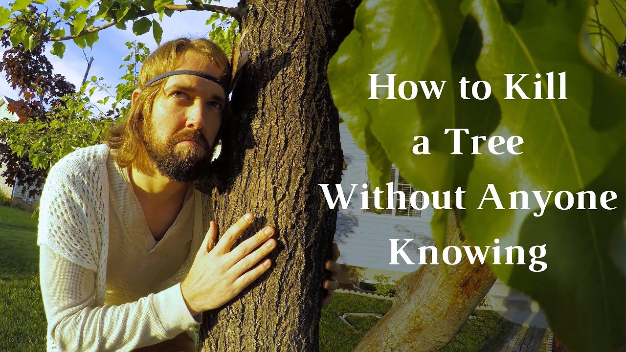 How To Kill A Tree Without Anyone Knowing  How To Kill A