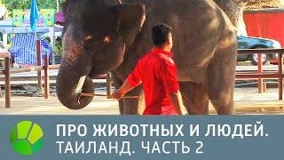 Таиланд. Часть 2 - Про животных и людей | Живая Планета