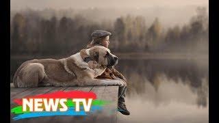 Top 10 sự thật thú vị về loài chó chắc hẳn bạn chưa biết