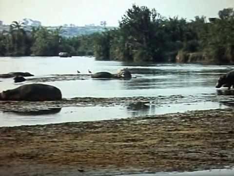 Down Belgian Congo river in 1956