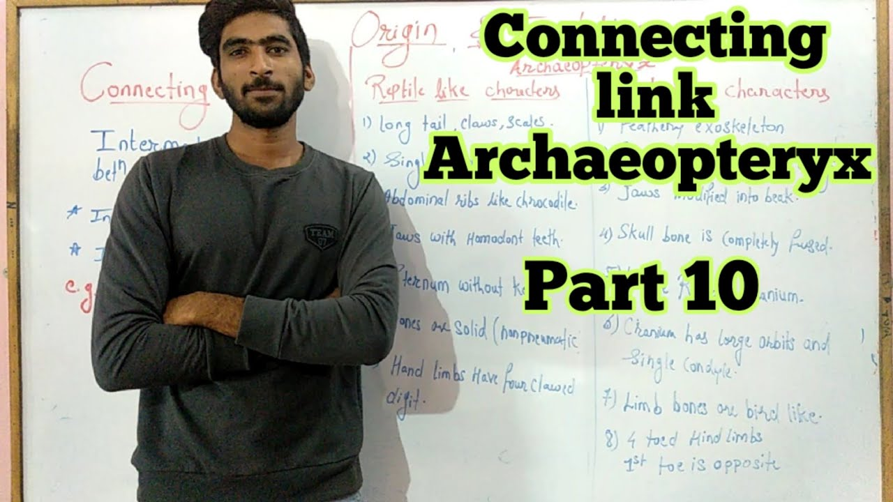 Connecting link Archaeopteryx | origin and Evolution part ...