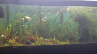 Happy black friday ya'll.  Much overdue fish room update... Now lets talk fish