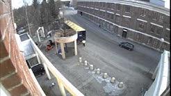Dinot saapuvat Oulun taidemuseolle
