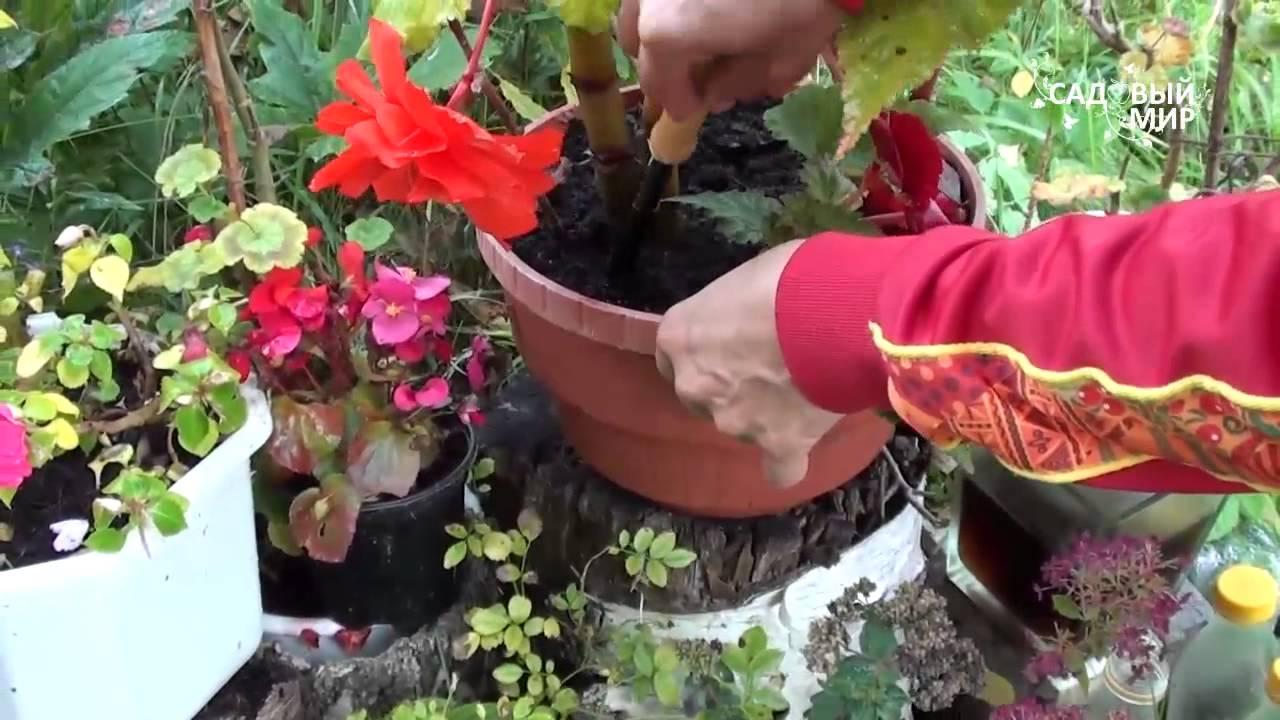 Инструменты для ухода за комнатными цветами