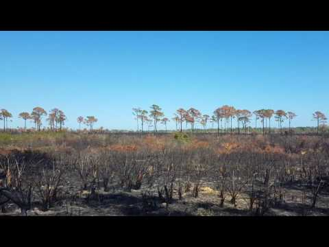 Burned Land, Canaveral National Seashore