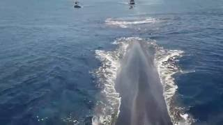 Swimming with Blue Whales in #SriLanka | https://www.facebook.com/Rechargetours/
