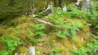 Woodland by picnic spot Cwm Bychan