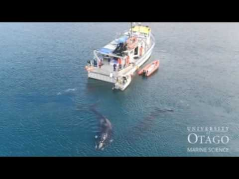 Polaris returns from whale study