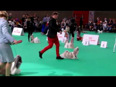World Dog Show' 18- shih tzu male champion class- best six