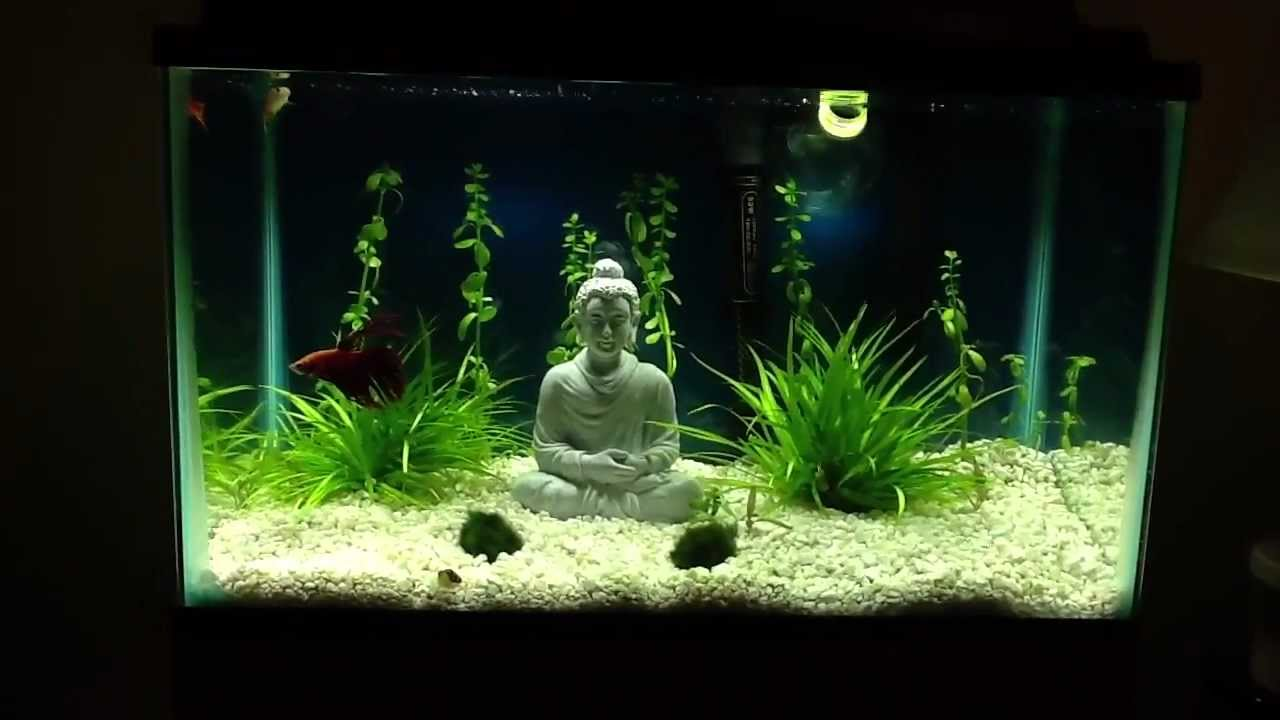 20 gallon freshwater planted aquarium 10 gallon betta plant   YouTube