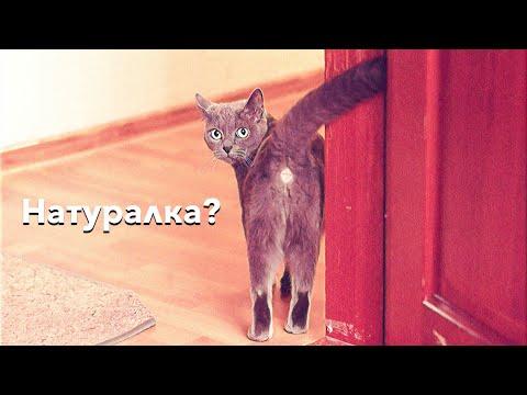 Как перевести кота на натуралку