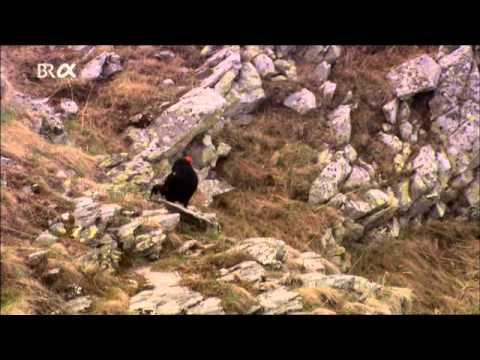დოკუმენტური ფილმი: ლაგოდეხის დაცული ტერიტორიები / Lagodekhi Protected Areas